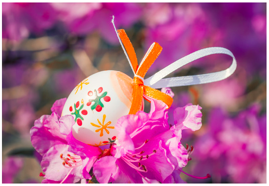 Beautiful pink Easter egg on a flowering tree branch - photo taken in a Park near Anaheim in 2013 all rights reserved