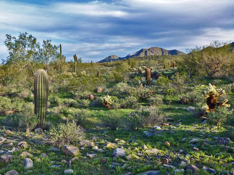 The Lost Dog Wash Trail In Scottsdale-The trail is ideal for training